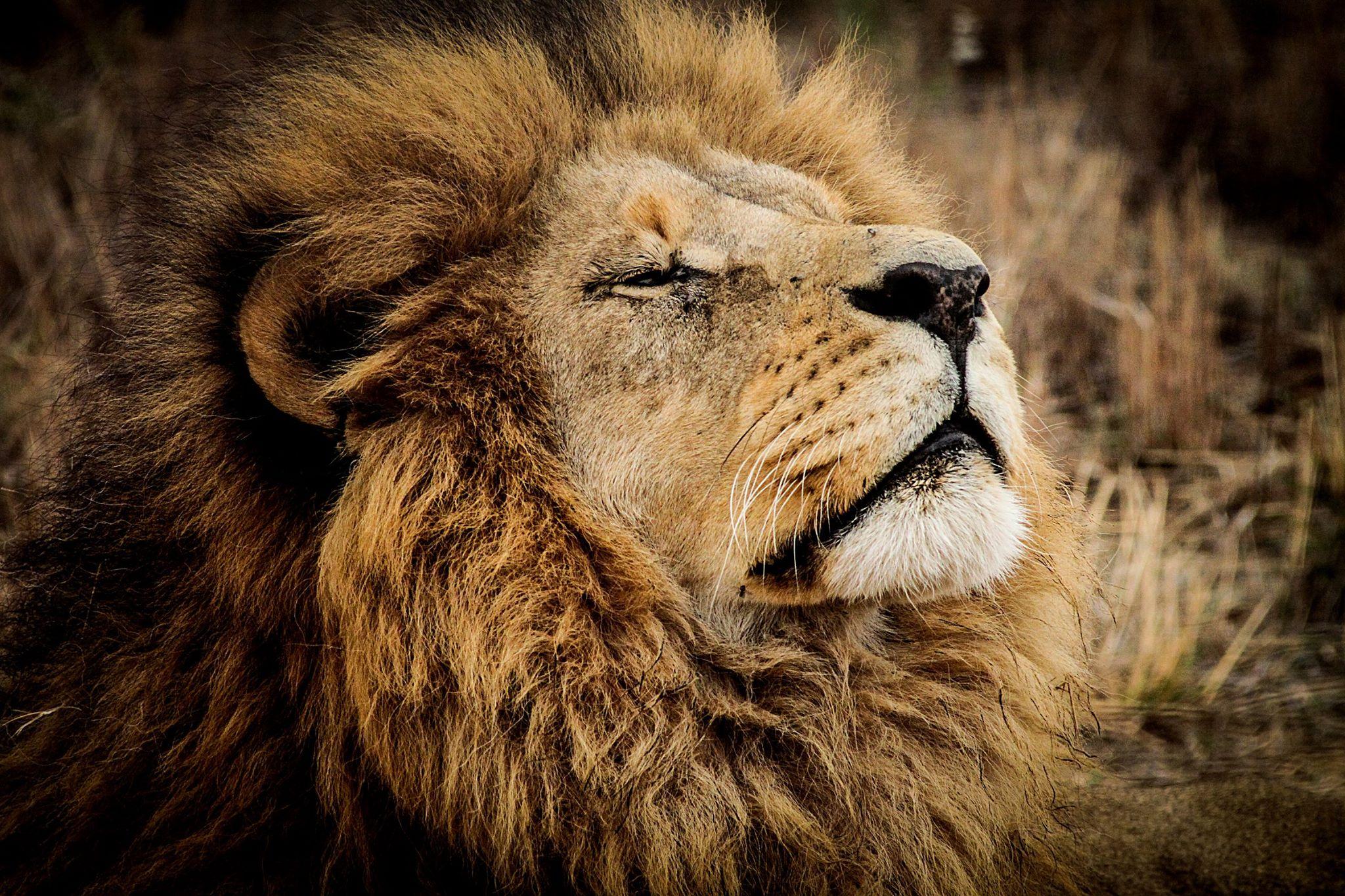 Animales: Animales Salvajes, CITES Y Leones