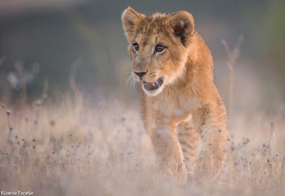 La realidad de nuestra formación sobre animales salvajes