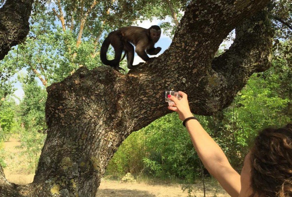 Efectos del entrenamiento en el bienestar de animales salvajes en cautividad
