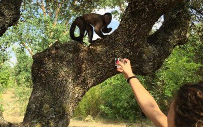 Efectos del entrenamiento mediante refuerzo positivo en el bienestar de animales salvajes en cautividad