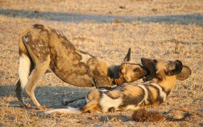 ¿Es necesaria la cautividad en animales?